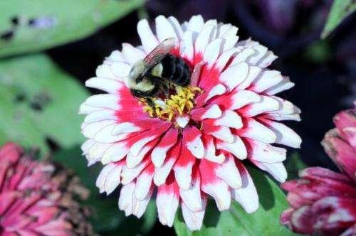 1-bee