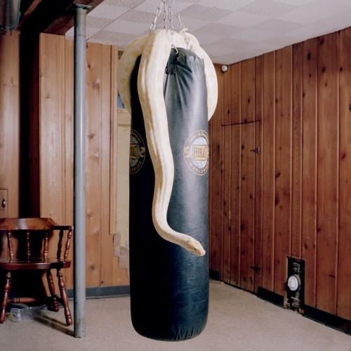 ally-burmese-python-932x932