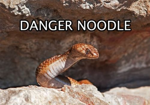 danger-noodle-653x0_q80_crop-smart