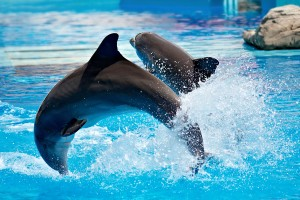 dolphin_show_in_lisbon_zoo_02-300x200