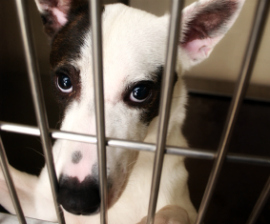 dog_cage_270x224