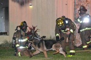 fire-dog2