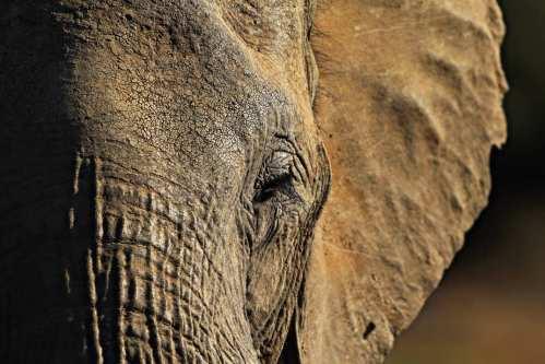 05-elephant-post-traumatic-stress-w536-h357-2x