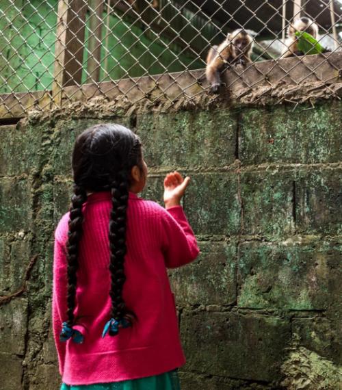 mohsin-kazmi-monkeychild