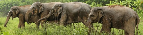 save-elephant-foundation-featured1