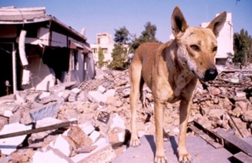 animals-can-predict-earthquakes-many-days-in-advance-1428230215-4399