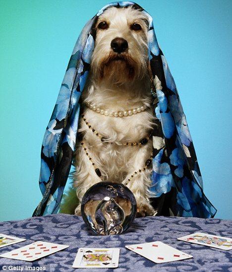 psychic-pets