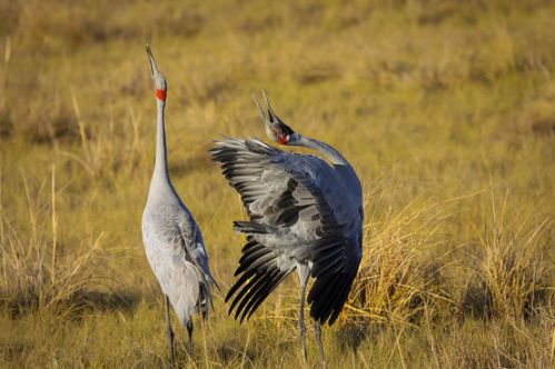 10-animals-weird-courtship